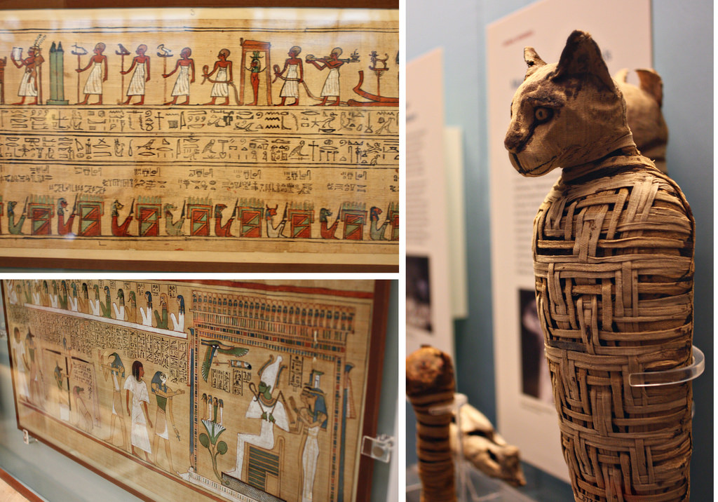 Ancient Egyptians were so fond of cats