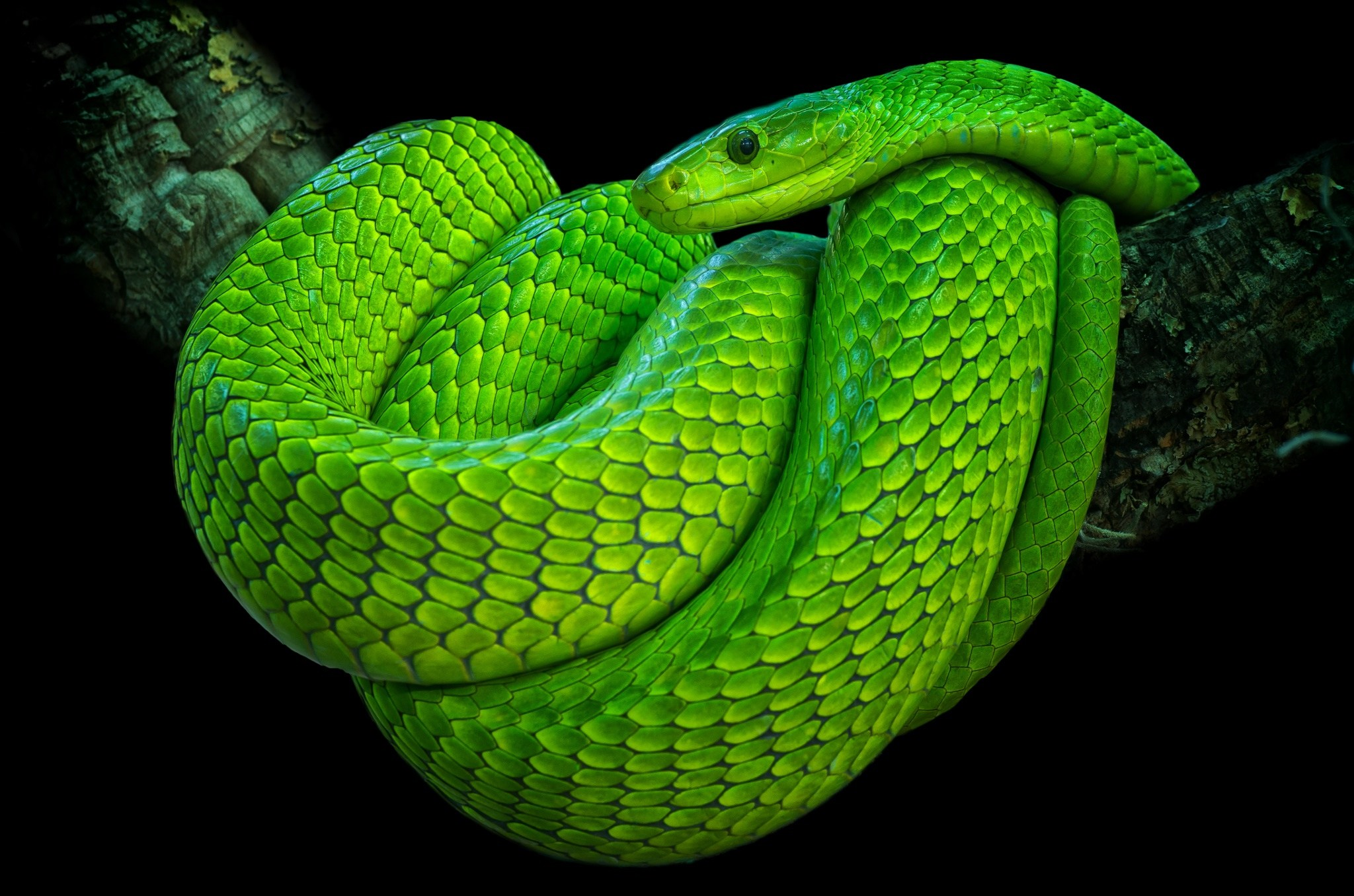 australia top 10 species of the most lethal snakes