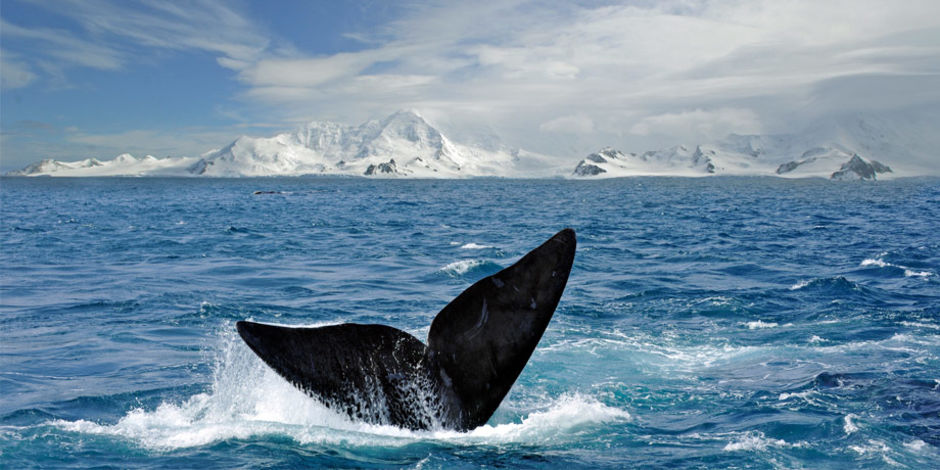 Antarctica contains 90% of the world's fresh water