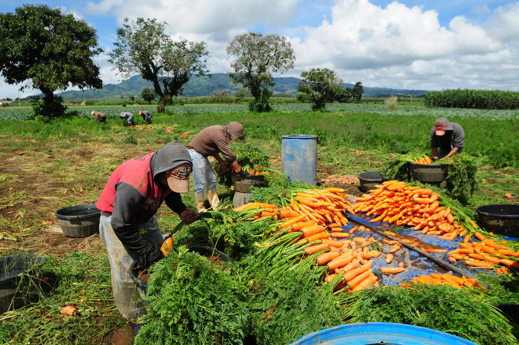 France is the second prime producer of agricultural goods