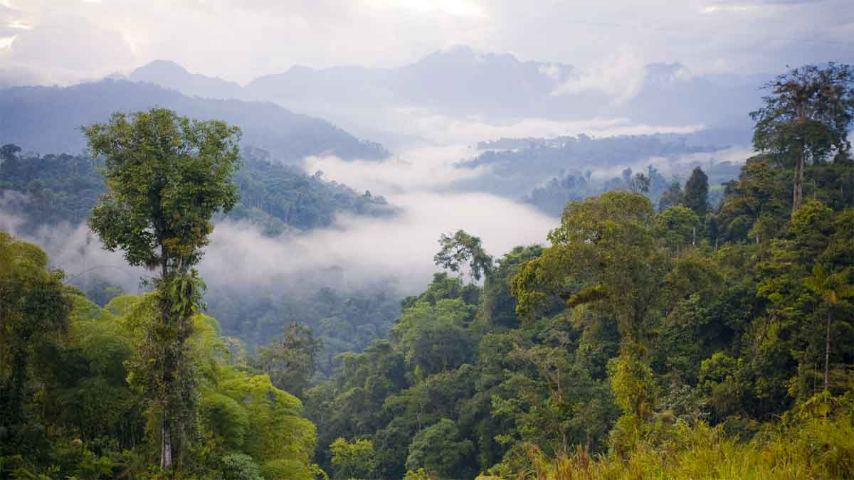 Amazon is the largest rainforest in the World