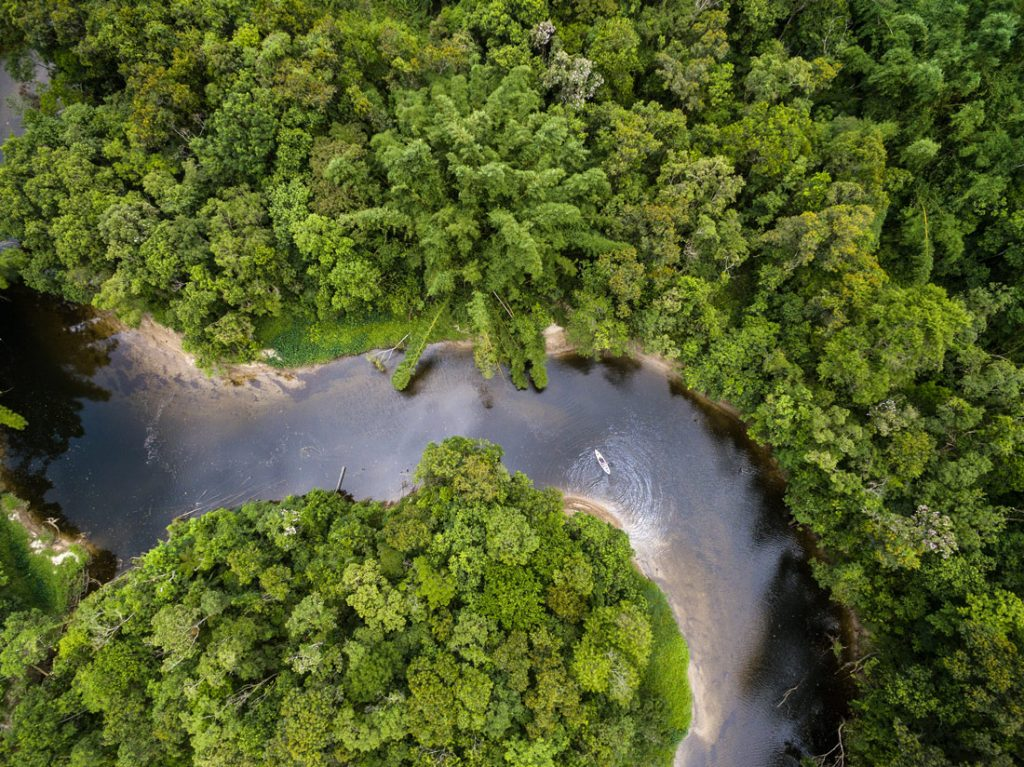 The trees of the forest are so close that it takes around 10 minutes for the rain to reach the ground