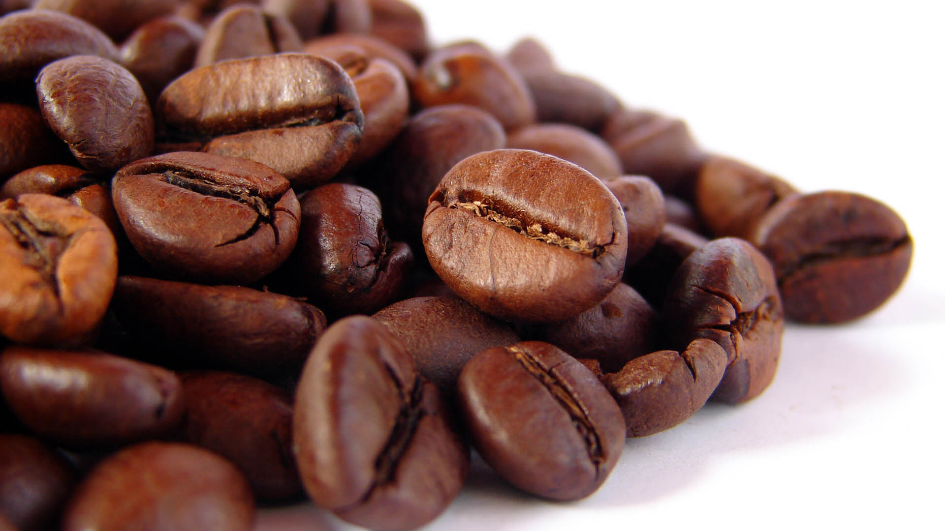 Most expensive coffee brands of the world made coffee from the dung of Thai elephants.