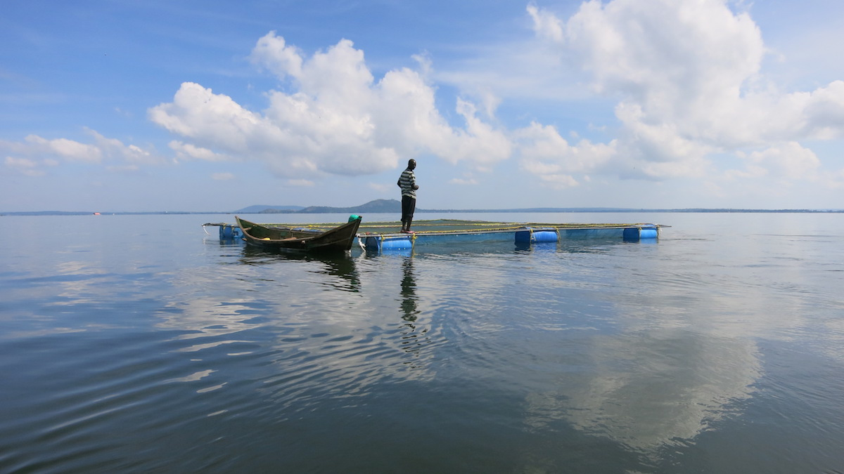 Lake Victoria is the world's second largest fresh water lake found in Kenya.