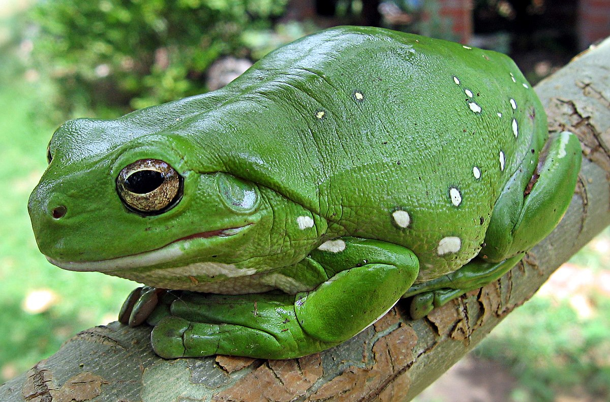 Frogs have a moist skin layer which is covered with mucous glands.