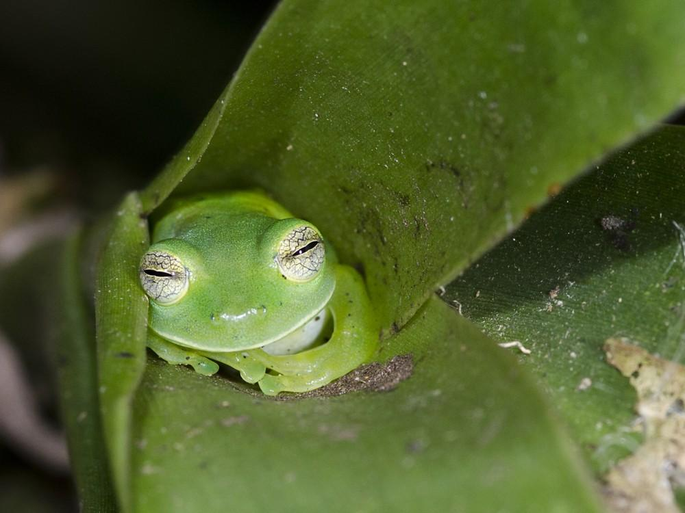 Frogs sleep with their open eyes.