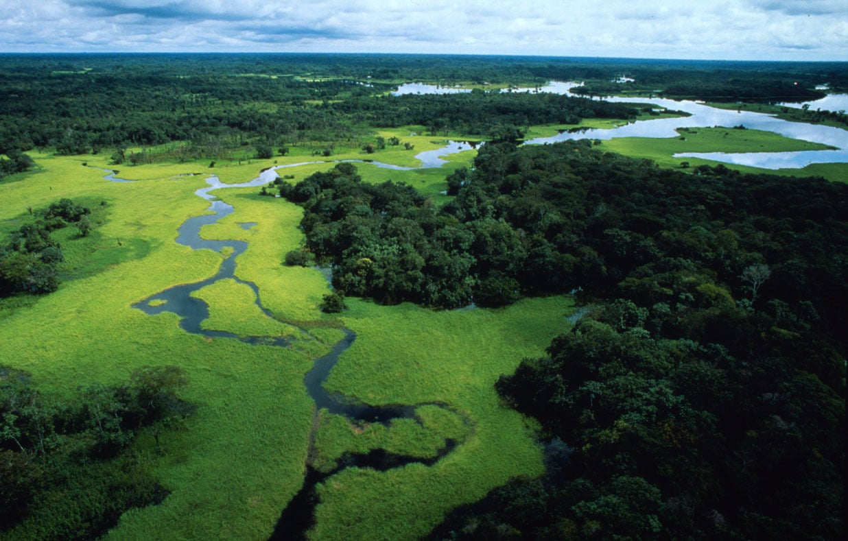 Russia has the world's largest area of forests.