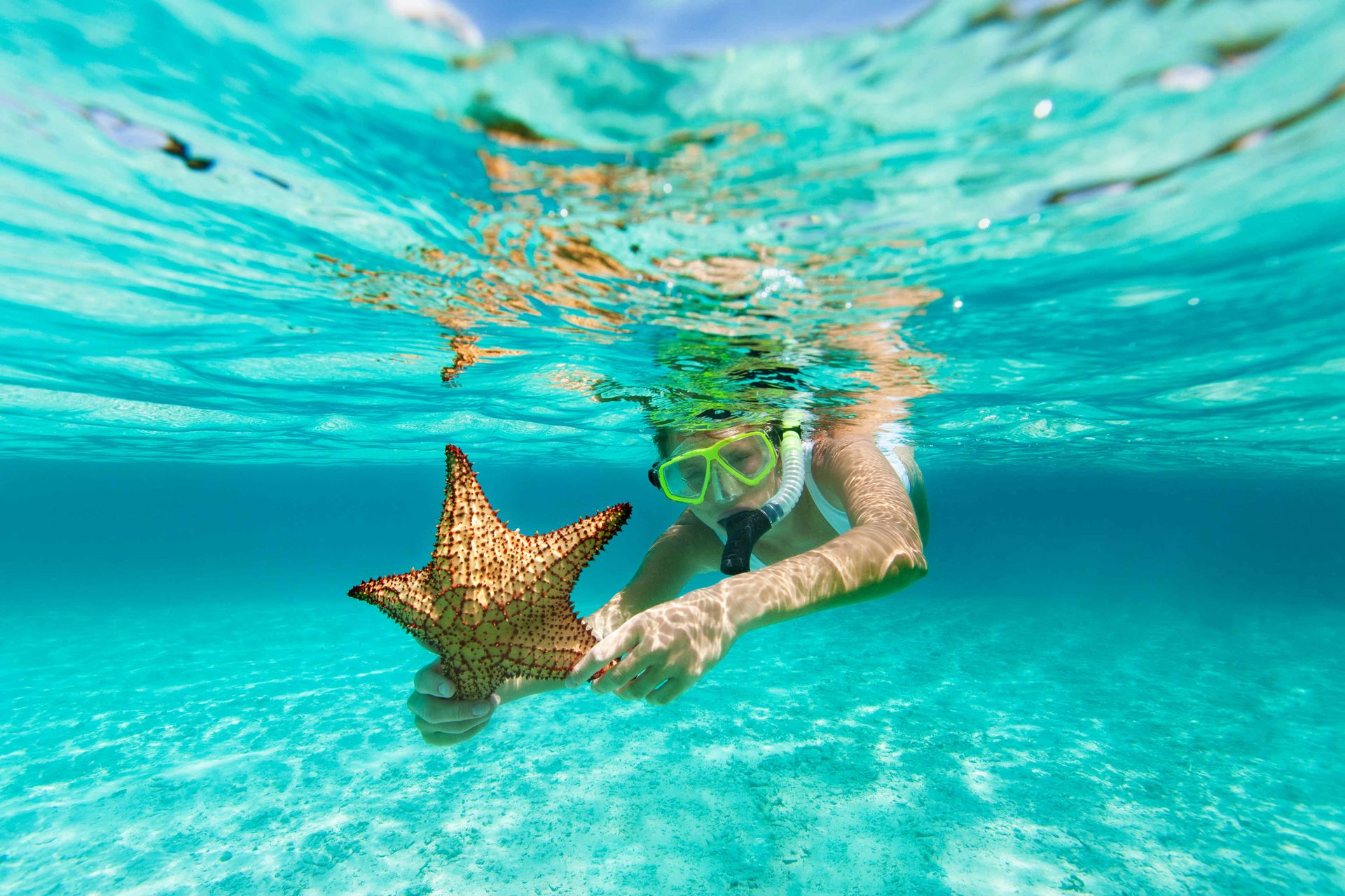 Starfish can weigh up to 11 pounds.