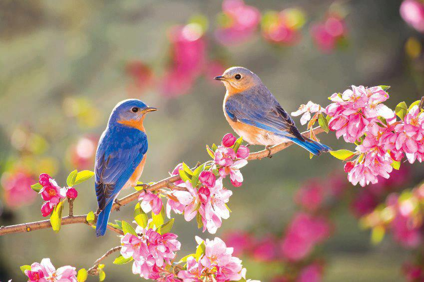There are over 1,400 bird species found in Venezuela.