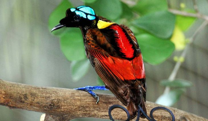Venezuela is 7th country in the world with the highest number of species.