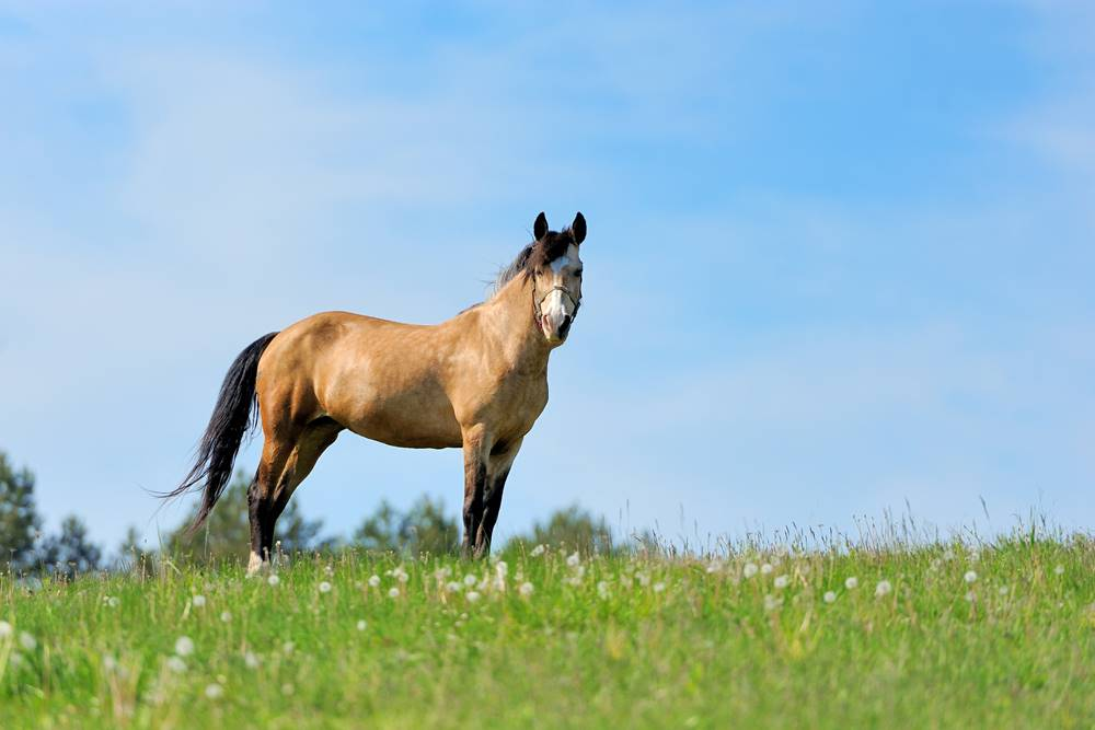 A young female horse is called a filly.