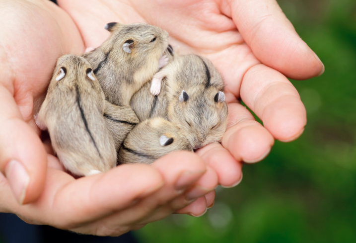 Female hamsters usually give birth to around eight children.