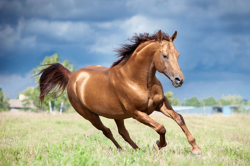 Horses gallop at around 27 mph.