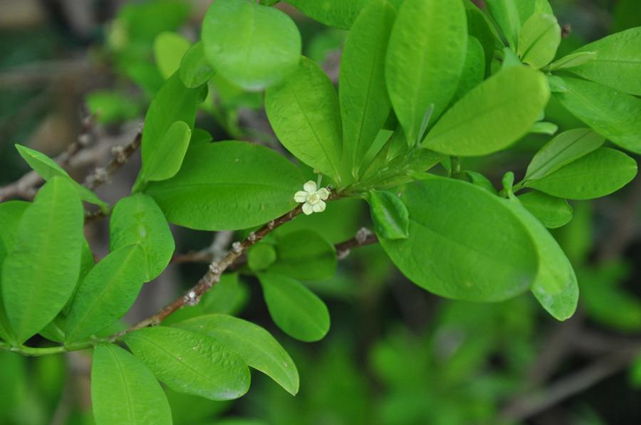 It takes 500 kilos of coca leaves to produce one kilo of cocaine.