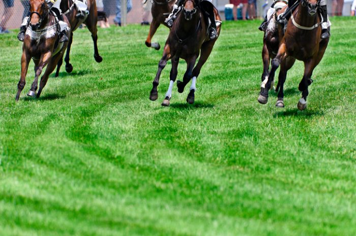 The Dubai World Cup is the richest horse race purse in the world.