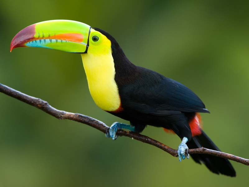 The Toucans bill releases heat.