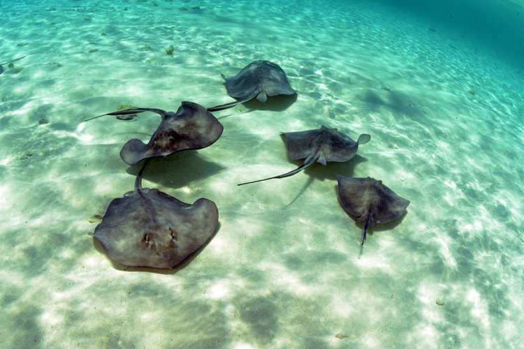 There are around 200 different stingray species.
