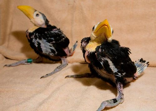 Toucans are born blind