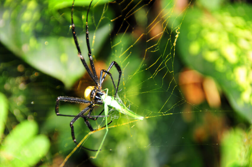 Most spiders build a new web every day.