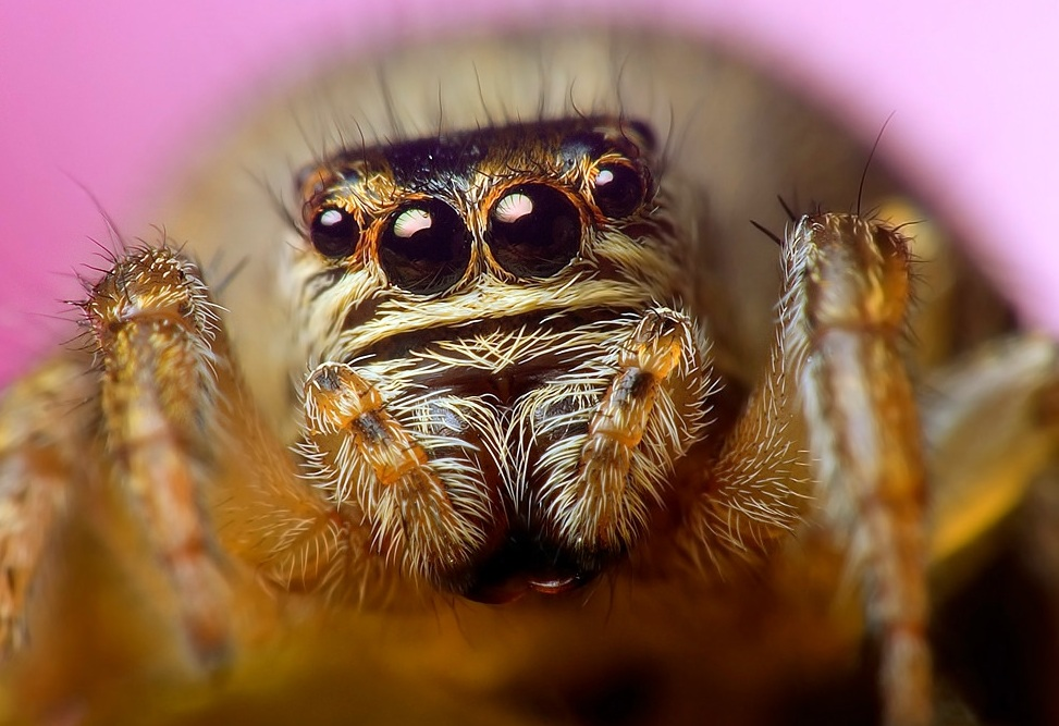 Most spiders have eight eyes.