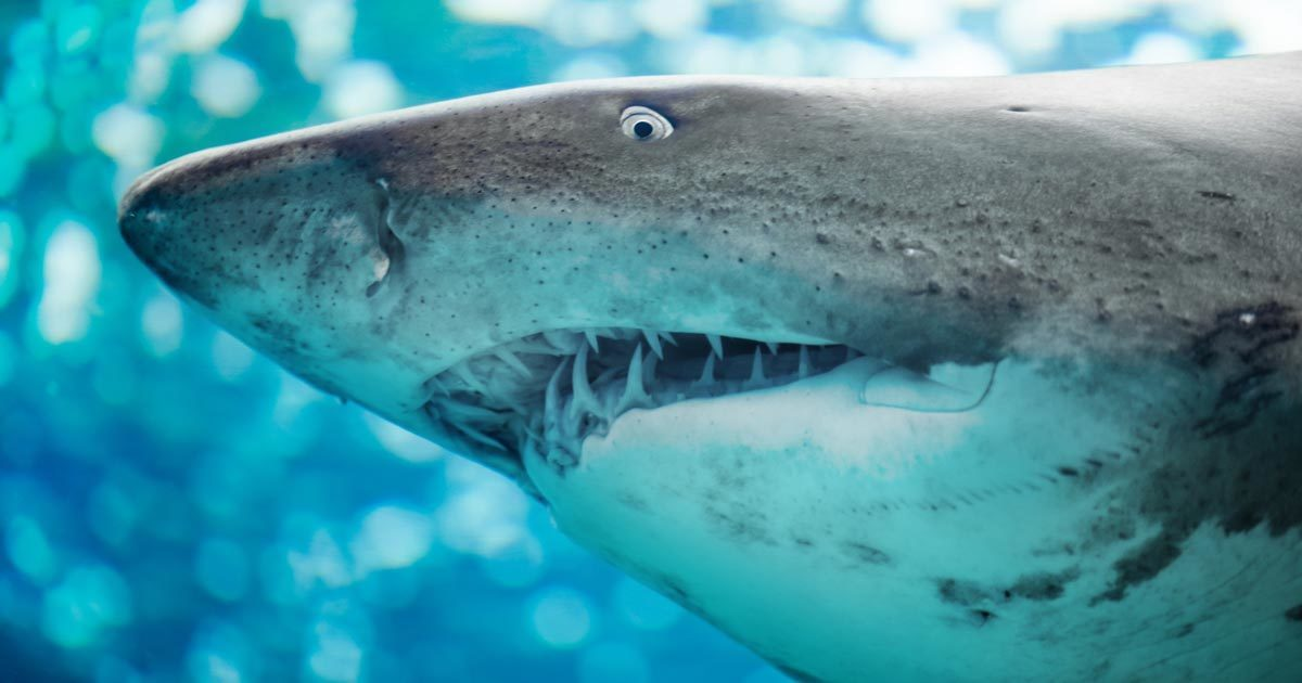 Sharks are the only fish with eyelids.