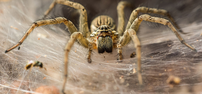 Spiders have between two and six spinnerets at the back of their abdomen.
