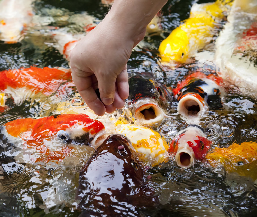 The hungrier fish is easier to catch.