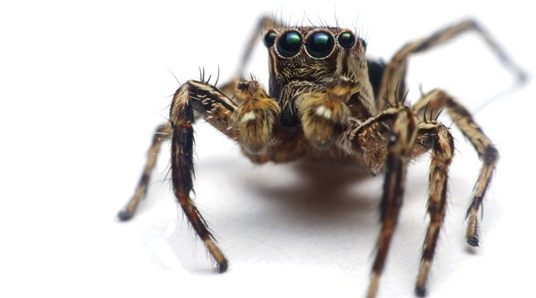 Spiders also have tiny hairs on their legs to help them hear and smell.