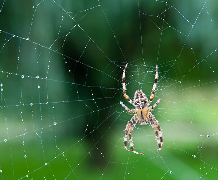 Web-weaving spiders have two or three claws at the tip of each leg.