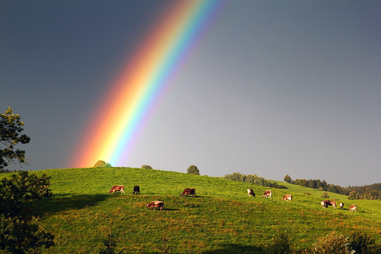 A rainbow happens when it is raining in one part of the sky and sunny in another.