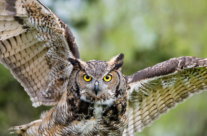 The eyes of Owls are very sensitive.