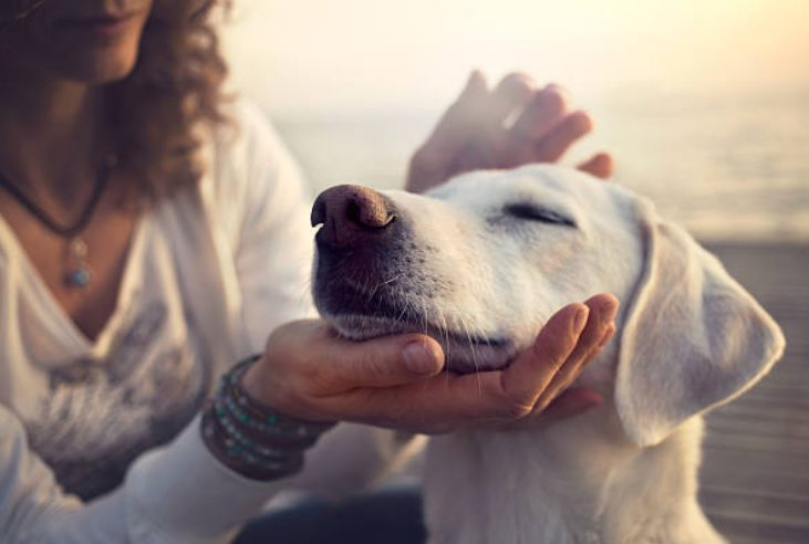 In 2011, Americans spent around US$61.4 billion on their pets.