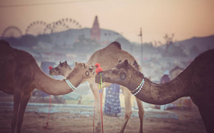 Riyadh has the world's biggest camel market.