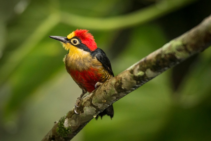 Ecuador has around 1,638 bird species.