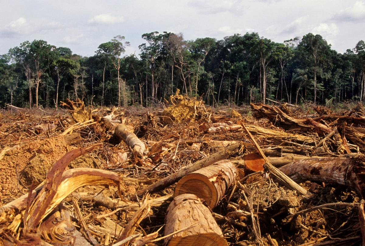 Haiti is also one of the most deforested nations of the world.