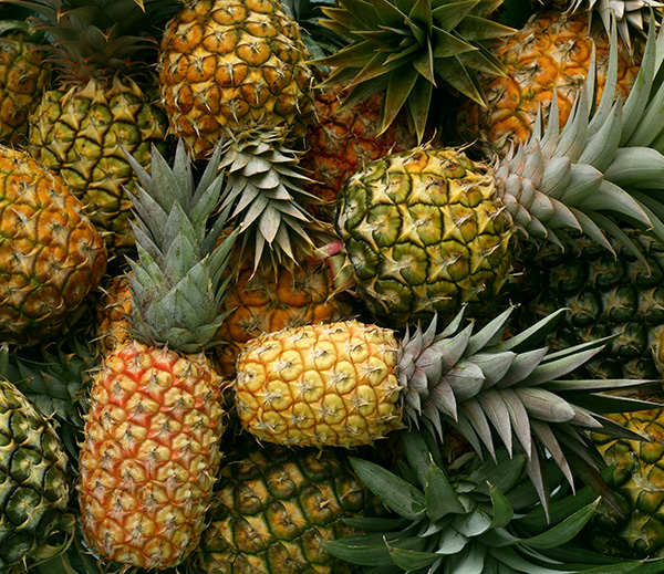 There are two types of pineapplescalled cayenne pineappleand red Spanish pineapple