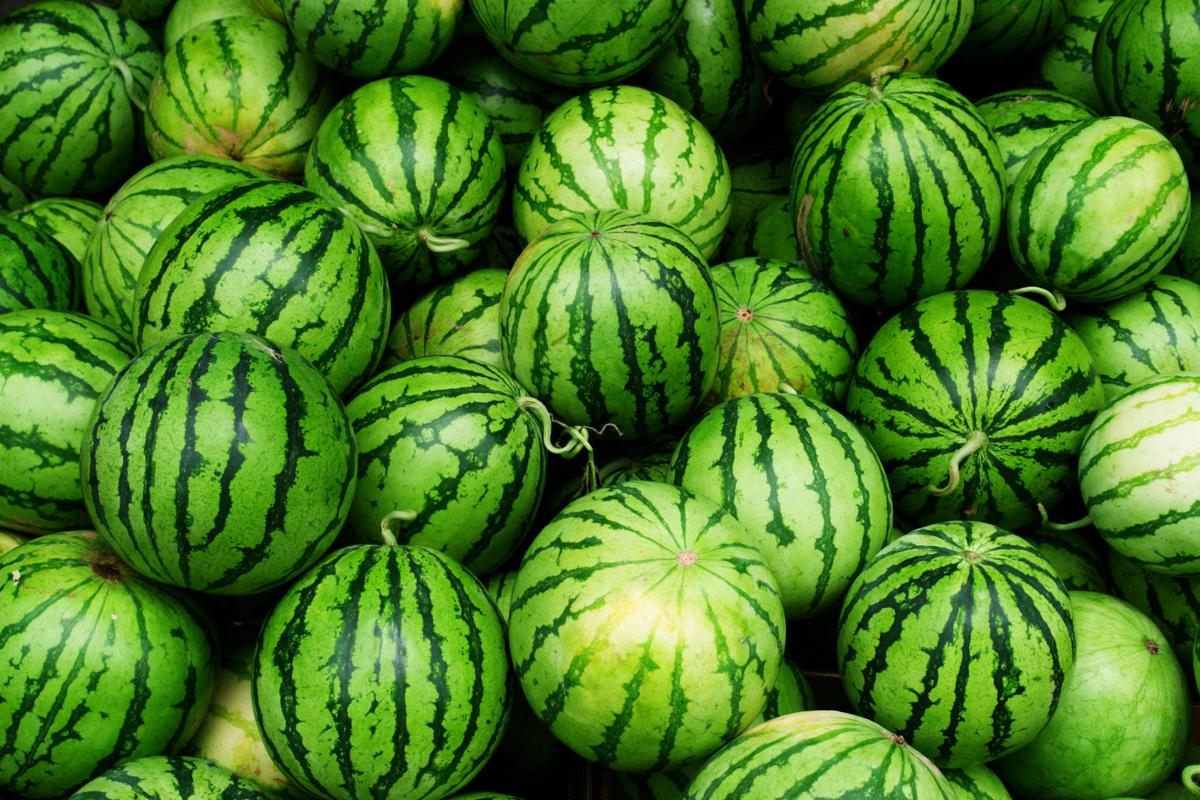 There are four basic types of watermelon seedless, picnic, icebox, and yelloworange fleshed
