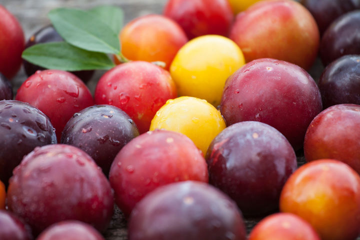 The skin of Plum can be red, yellow or purple in color.